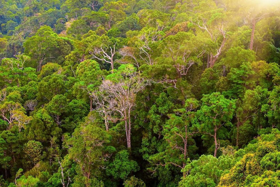 bosque-tropical