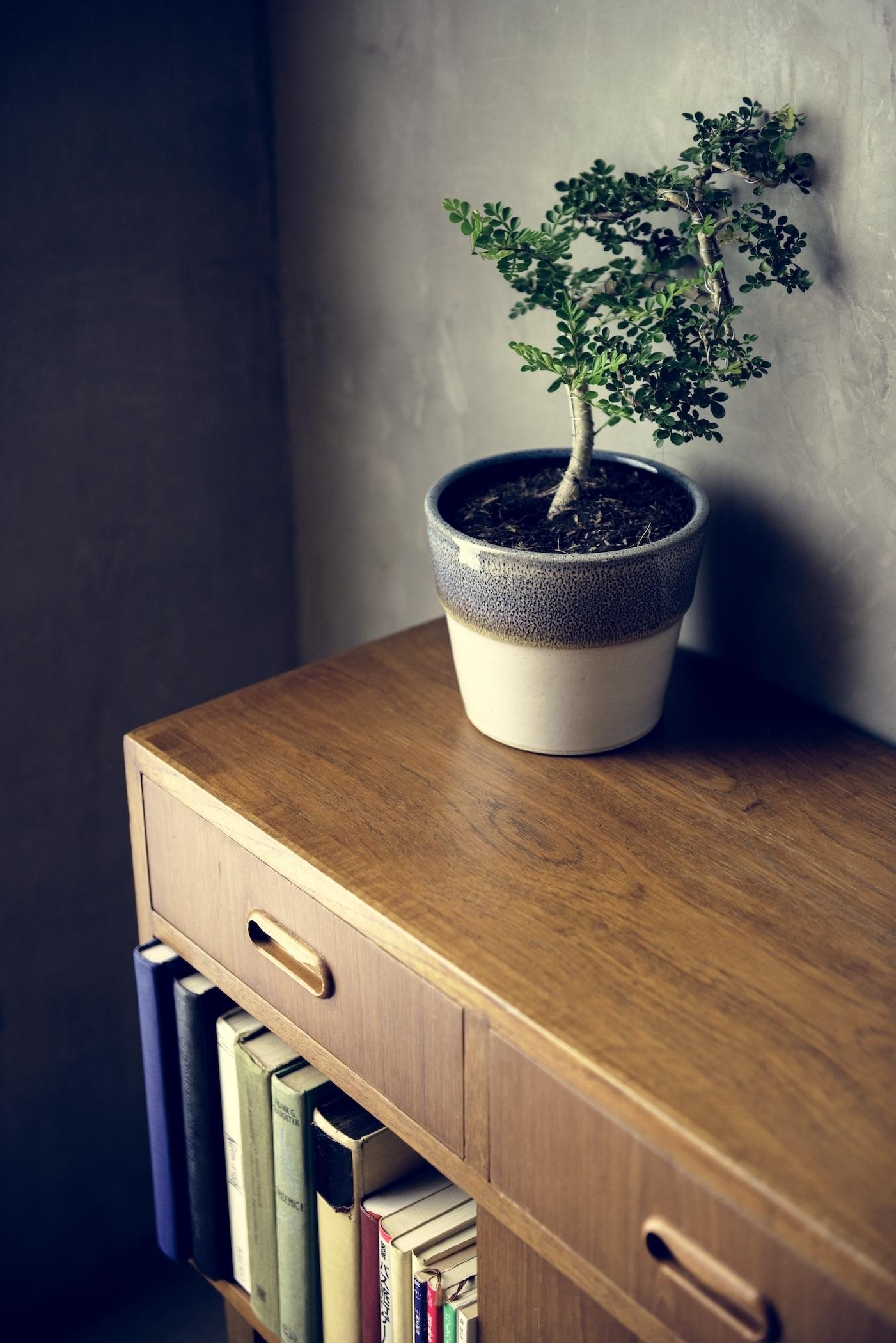 mueble-bajo-de-madera-con-libros-en-hogar-japones-estilo-con-puntos-en-comun-con-el-hogar-sostenible