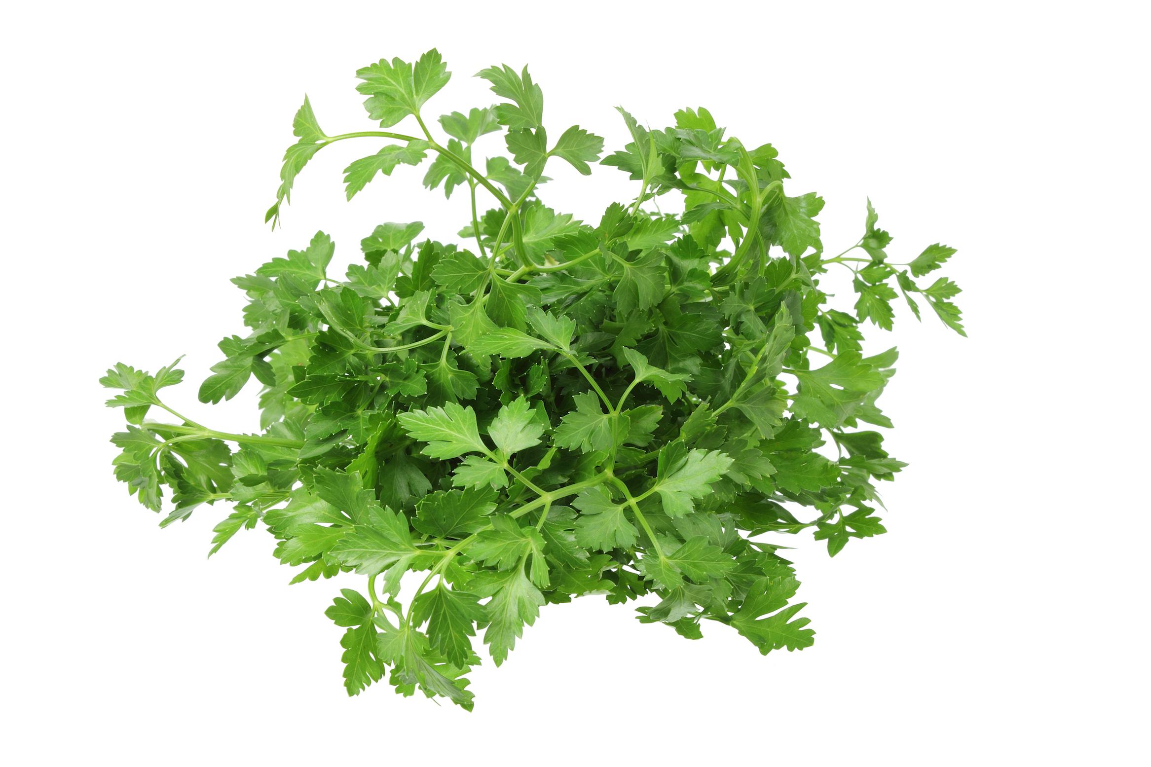 ramitas-de perrejil-fresco-conimento-de-cocina-natural-d-hogar-sostenible-y-ecologico
