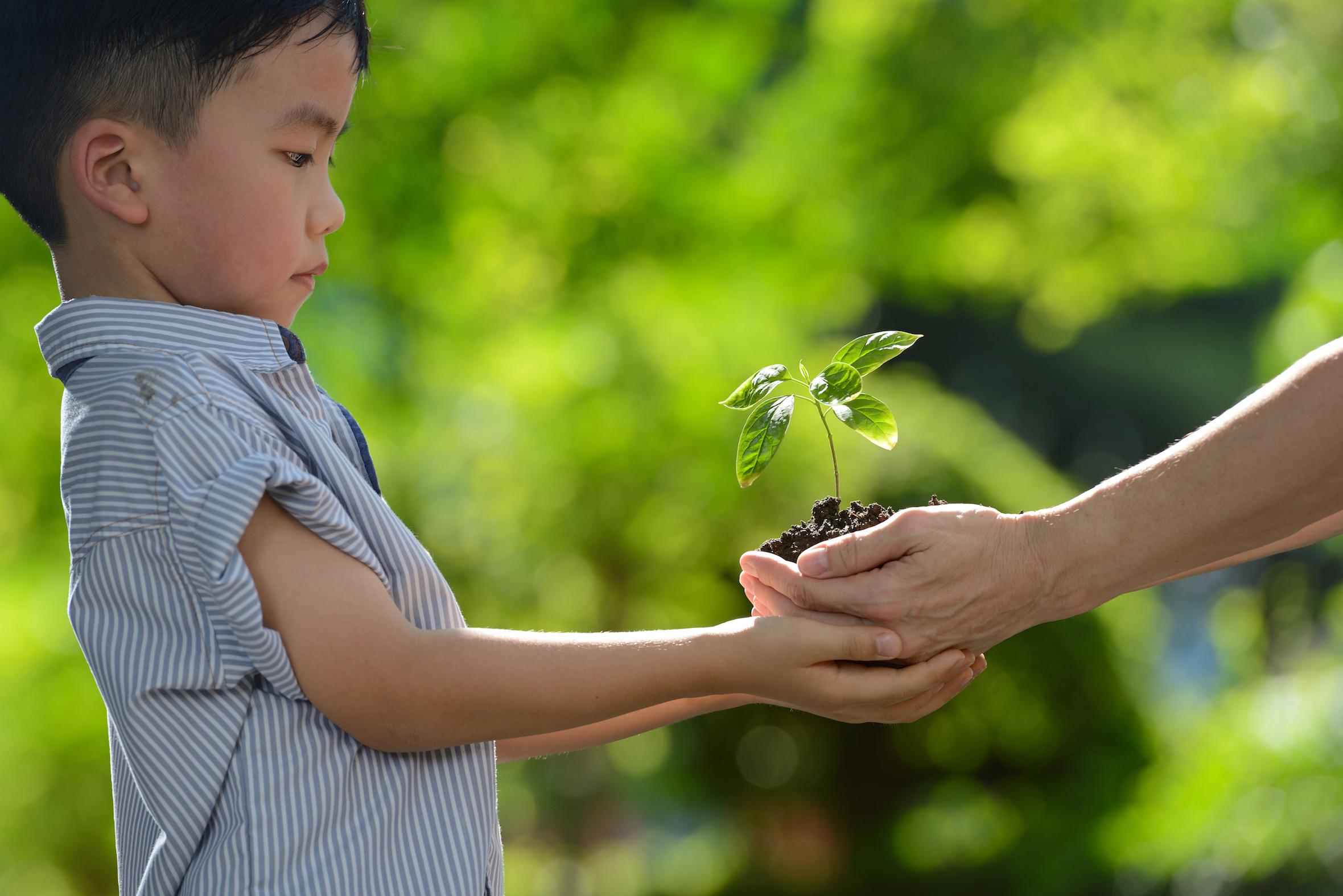 niño-recibe-en-sus-manos-pequeño-arbol-para-plantar