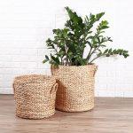 cesta-para-plantas-y-orden-terronj